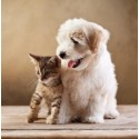 Gyvūnų prekės
